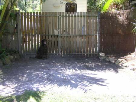 A Back Yard Before Hydromulch